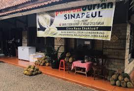 festival durian sinapeul sindangwangi majalengka - indonesia traveller guide - wisata duren majalengka