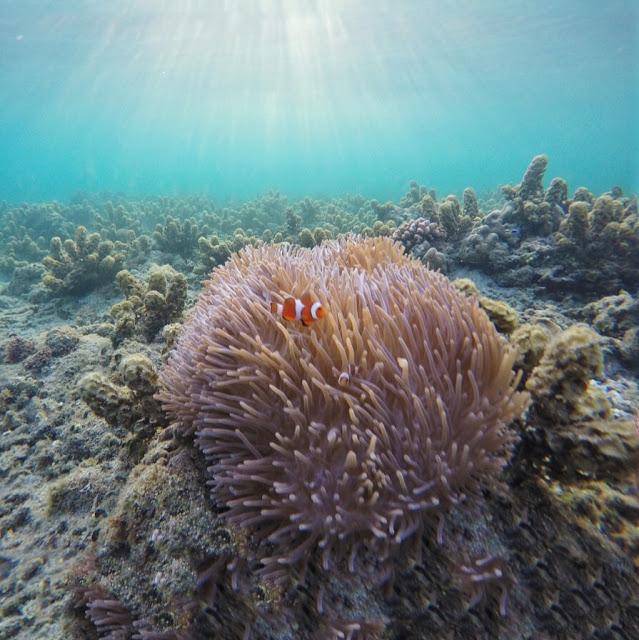 nemo di pulau moyo, indonesia traveller, photo by: ceritafebrian.com